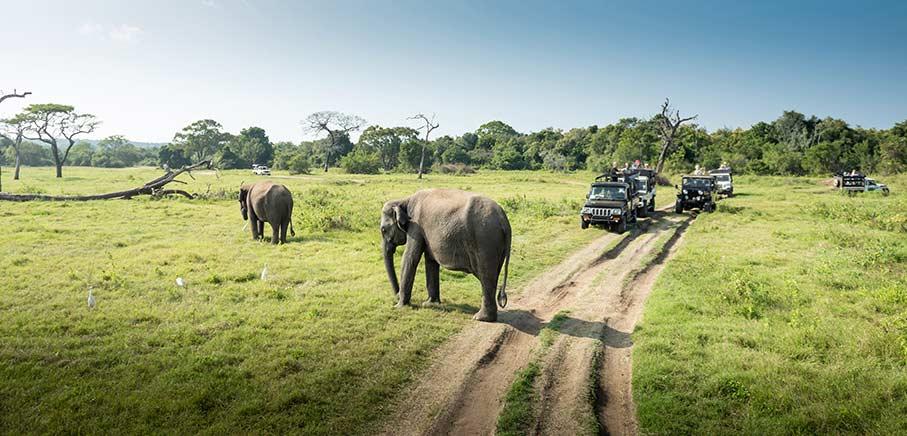 Populärt med safariresor i Sydafrika